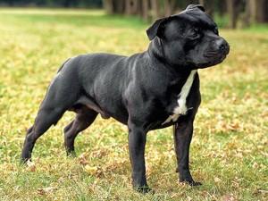 人気犬種12