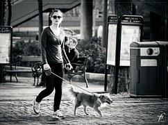 人気犬種16