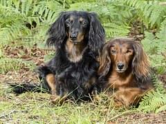 人気犬種5