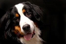 大きい犬種24