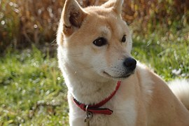 人気犬種4