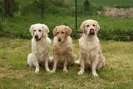 大きい犬種2