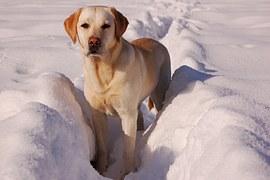 大きい犬種1