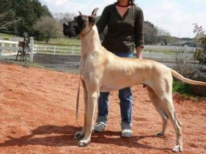 大きい犬種18