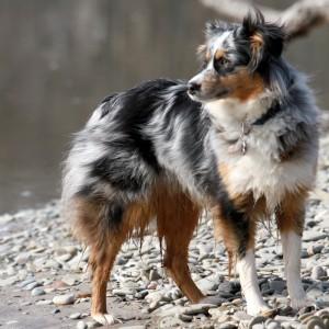 人気犬種22