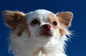 人気犬種15