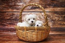 人気犬種14