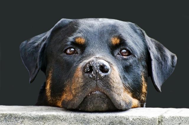 dog-214580_640