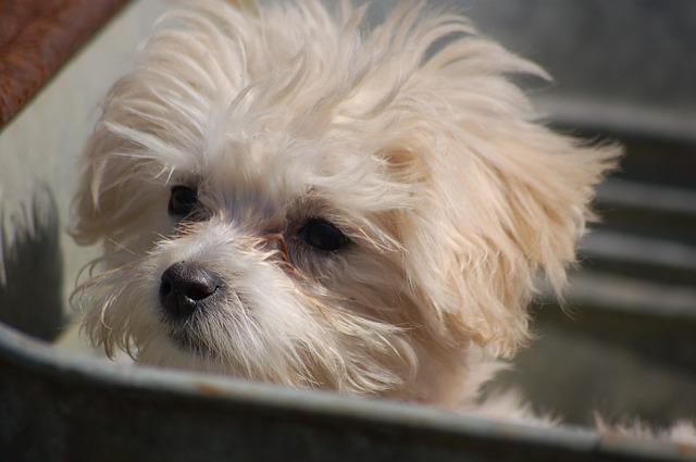 puppy-1491605_640
