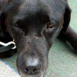 犬の血圧の正常値とは?高い場合に気を付けるべきこと【完全版】