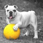 犬の健康食品に副作用はない?安全なサプリを選ぶポイントとは