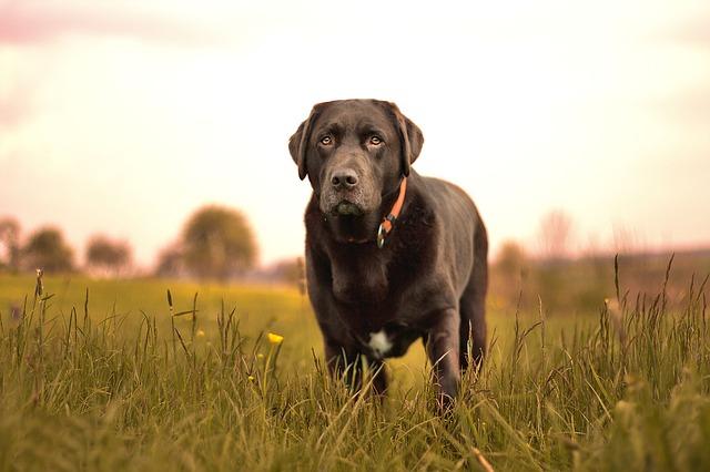 dog-1371948_640
