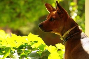 犬の健康を守る!おすすめドッグフード10選と効果を紹介!