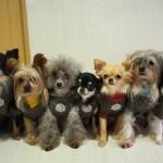 犬の種類!飼いやすい小型犬ランキングTOP5