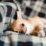 犬と一緒に寝ると病気になるリスクが高い!?その理由とは?