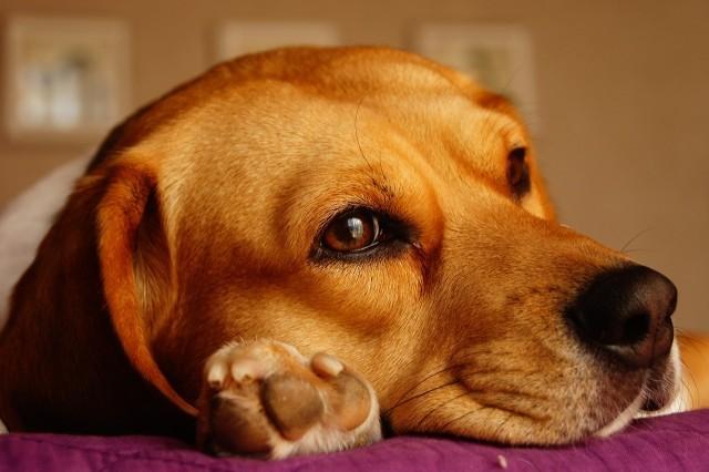 dog-1264667_1280