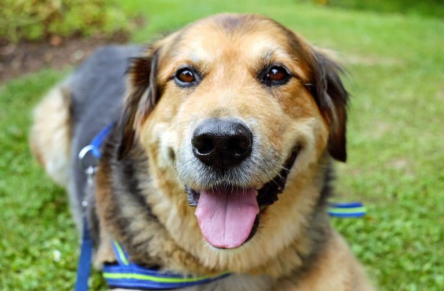 dog-1535905_1280