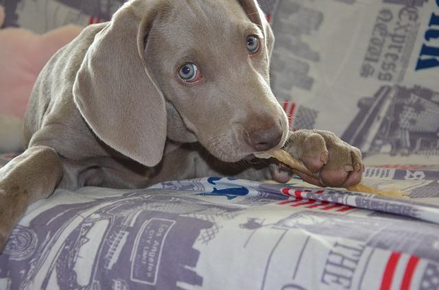 dog-672225_640