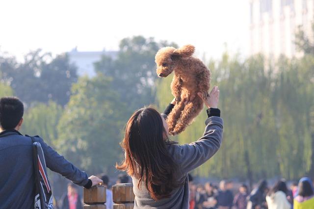 dog-746379_640
