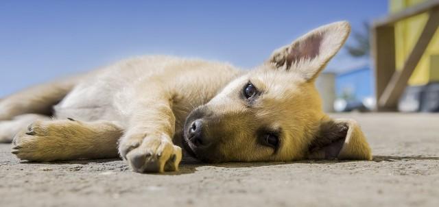 dog-918620_1280