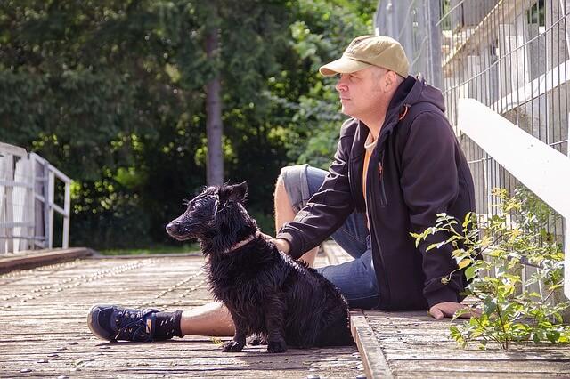 wet-dog-1517738_640-1