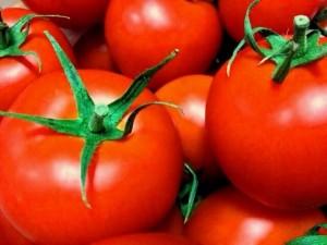 犬もトマトを食べる?その効果と注意点&簡単レシピを紹介!