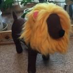 犬にライオンのかぶりものをさせたい!簡単にできる作り方!