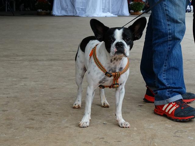 dog-1041141_640