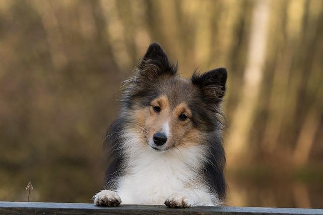 dog-1086285_640