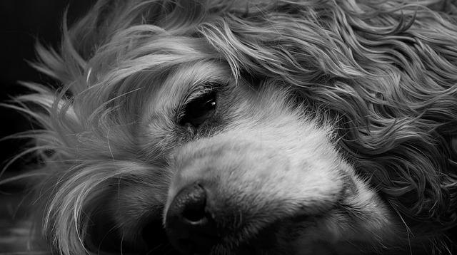 dog-1361143_640