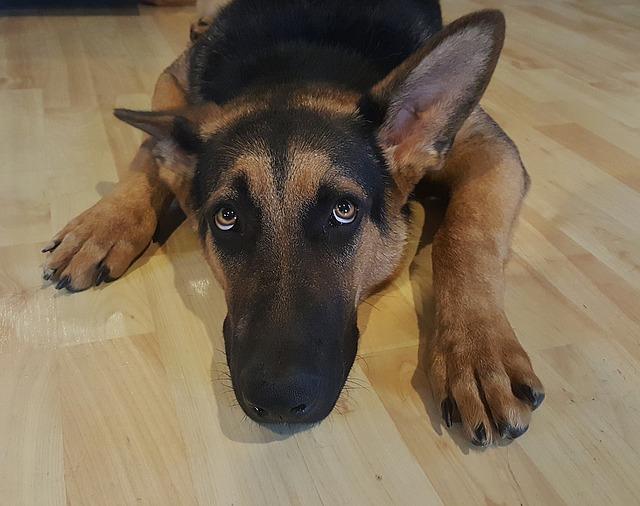 dog-1418330_640