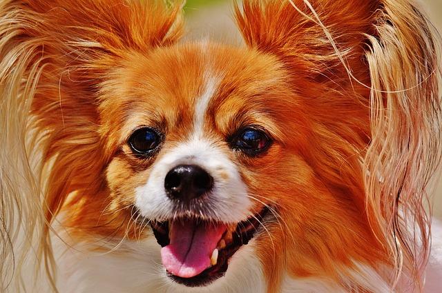 dog-1532754_640