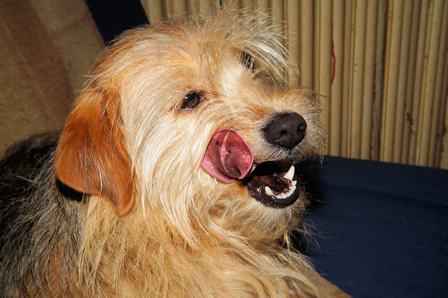 dog-253981_640