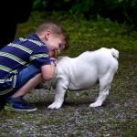 犬を英語でしつけるメリットとは?基本のコマンドフレーズも紹介