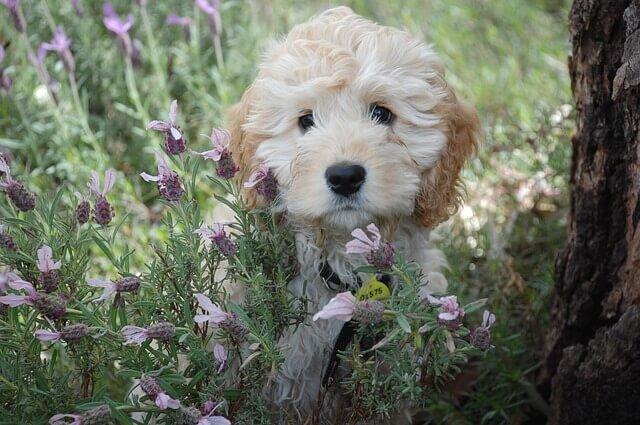puppy-1056124_640-1