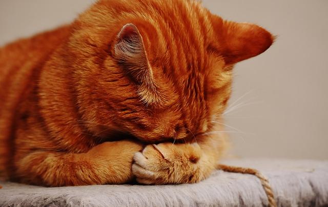 cat-1675422_640