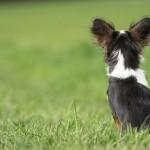 犬の値段の違い!同じ犬種なのに価格が安い・高いのはどうして?