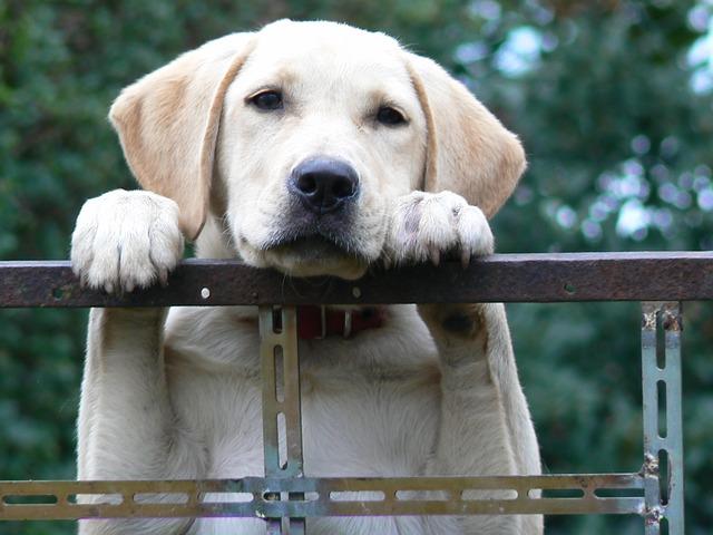 dog-1604357_640