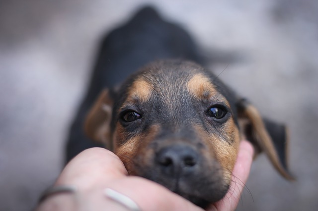 dog-245353_640