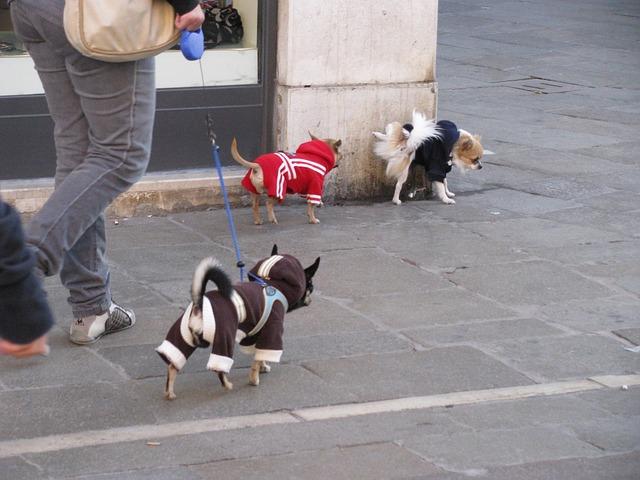 dog-79195_640-1