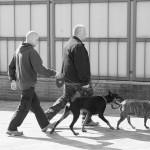 犬のリード!伸縮タイプは危険って本当?安全第一の選び方!