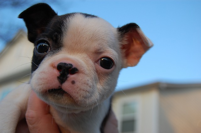 puppy-1601232_640