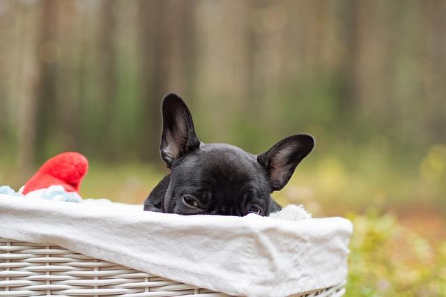 puppy-486744_640
