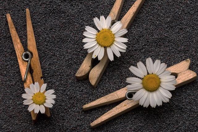 seeds-1533654_640