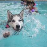 犬が氷を食べる時の注意点!正しい与え方と適切な量とは?