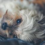 ペット保険に入らなかった人の末路…経験者がオススメする資料請求の比較ポイント