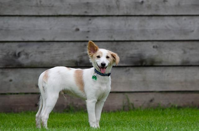 puppy-750629_640
