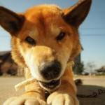 犬の健康管理に重要なポイントは?長生きさせる3つの秘訣!