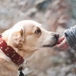 耳が遠い?老犬の難聴の見極め方と日常生活の注意点を解説!