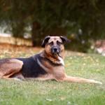 犬のビタミン不足はどんな影響があるの?効率的な摂取の方法とは?